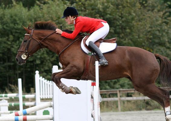 active-equestrian